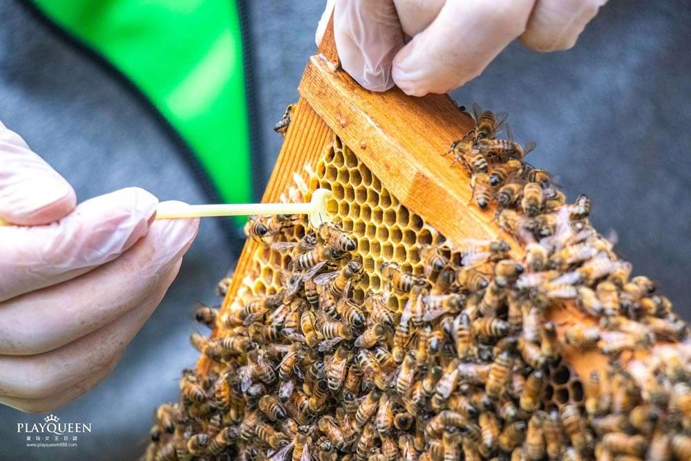 愛蜂園新竹蜜蜂生態體驗,龍眼蜜、荔枝蜜、百花蜜、天然花粉、蜂王乳,台灣在地天然蜂蜜