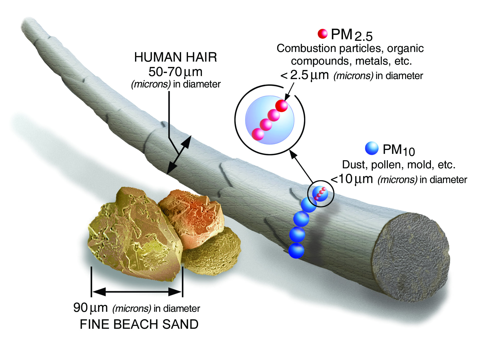 Illustration showing the scale of particulate matter