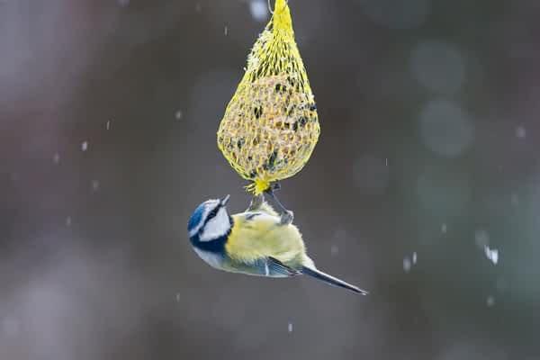 Vögel beobachten am Futterhaus
