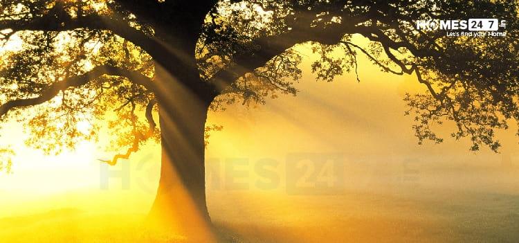 Vastu Trees for Home