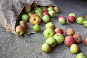 Gıda İsrafı Konusunda Genel Bilgilendirme