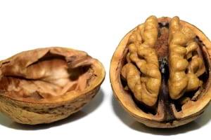 Beyin Gelişiminde Beslenmenin Etkisi