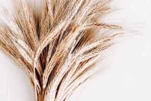 Makarnalık Buğdayı Farklı Kılan Nedir?