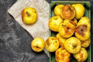 Gıda İsrafına Karşı İnovatif Gıda Paketlemesi ile Mücadele