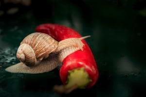Yavaş Yemek Hareketi: Slow Food