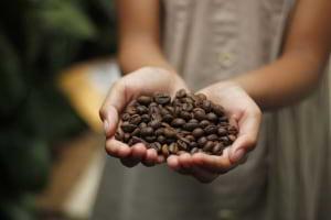 Çekirdekten Gelen Enerji : Kafein
