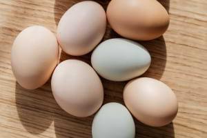 Yumurtanın Kabuk Rengini Ne Belirliyor?