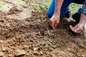 Tohum Nedir, Ne Değildir?