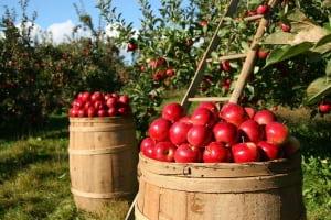 Avrupa Gıdalardaki Pestisit Kalıntılarını Nasıl Gözlemliyor ?