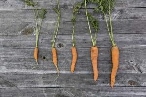 Gıda Teknolojisi, Gıda Kaynaklarını Nasıl Güvence Altına Alabilir ?