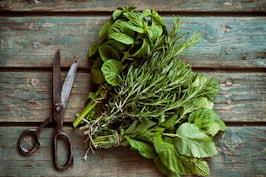 4 plante din bucatarie, cu beneficii extraordinare
