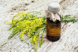 Sulfina (Melilotus officinalis): beneficii și contraindicații