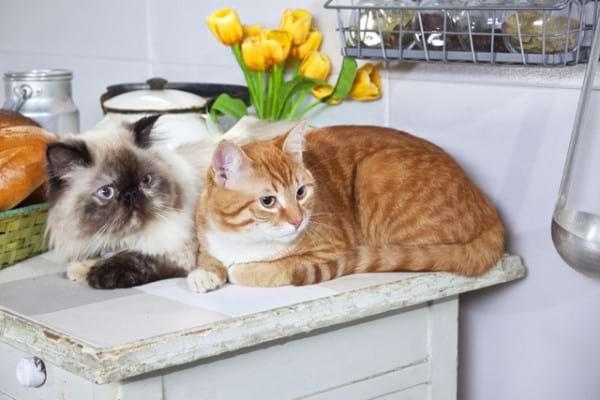 Alergiile la parul de pisica: cauze, simptome, tratament