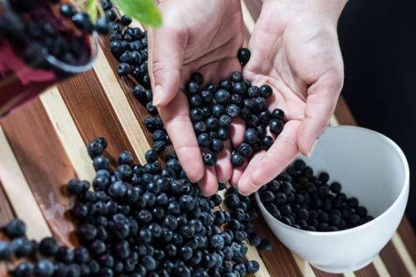 Aronia - ce beneficii și proprietăți are acest fruct