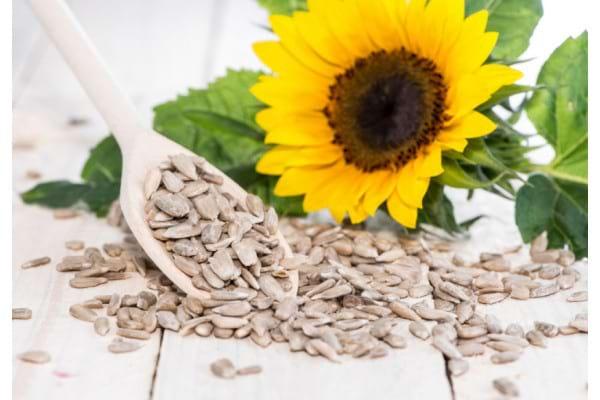 Sunt semințele de floarea-soarelui bune pentru slăbit? - Slab sau Gras