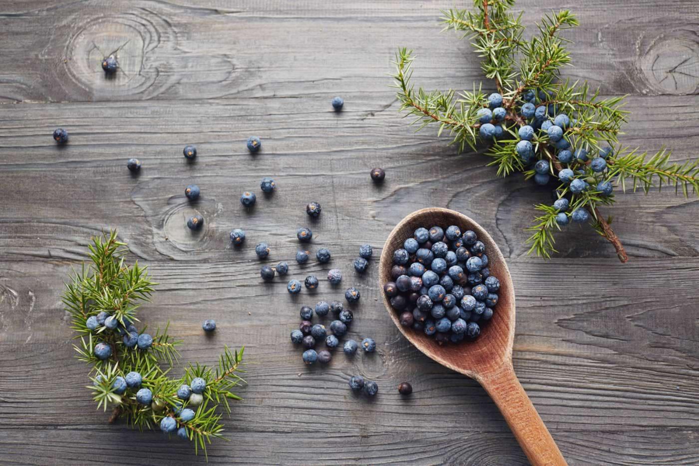 Fructele de ienupăr, medicamentele sezonului rece
