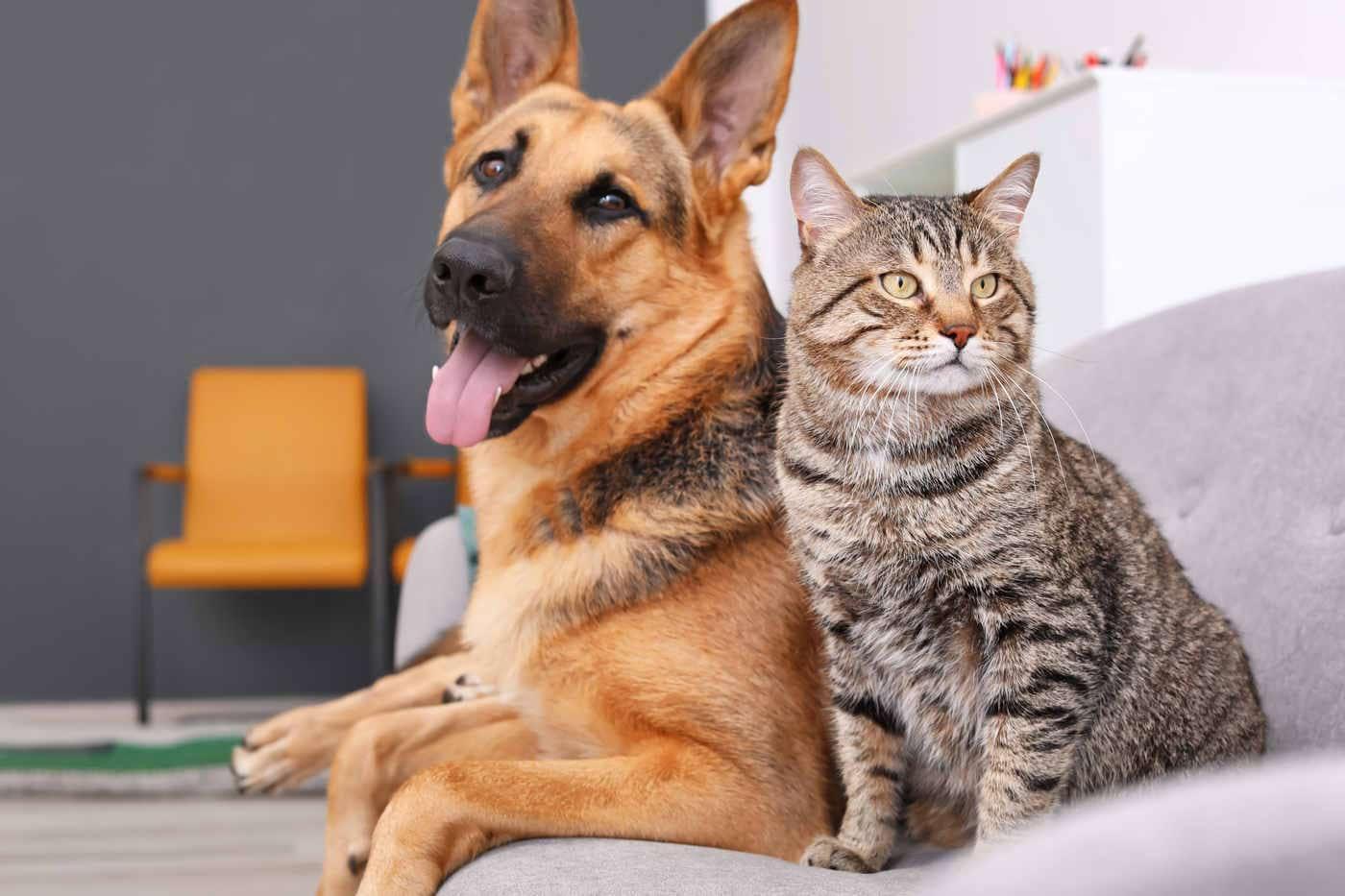 Animalele de companie reduc stresul și anxietatea