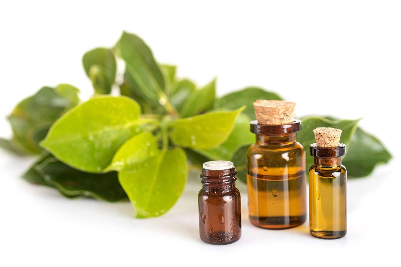 Uleiul esențial de ravintsara, antiviral natural