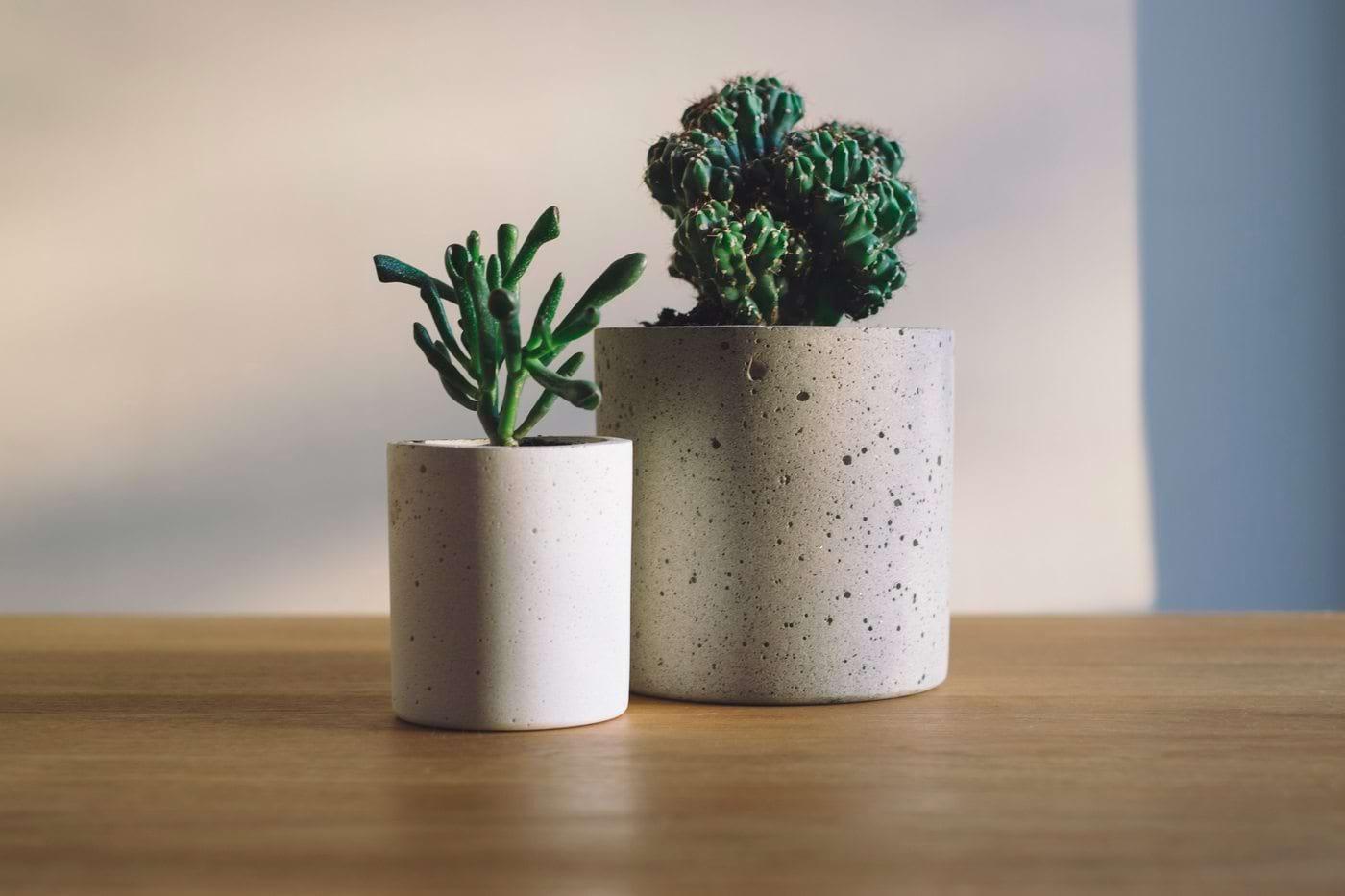 5 plante de apartament sigure pentru copii și animalele de companie