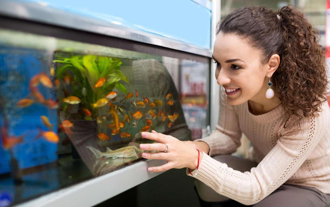 Beneficiile antistres ale unui acvariu cu pești