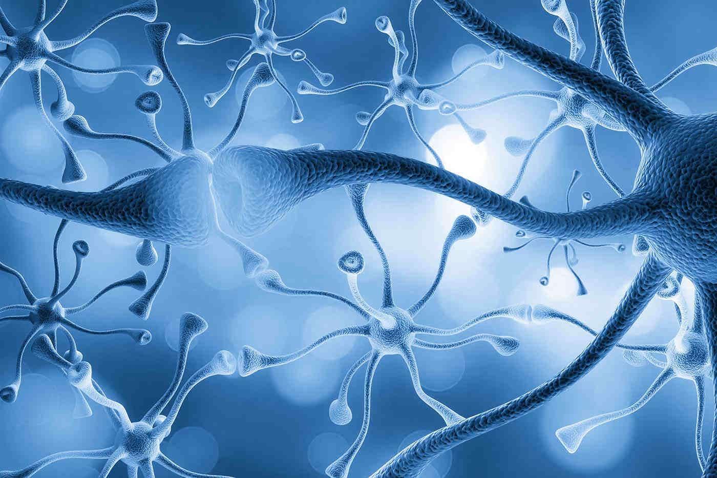 Neuronii prosperă și în condiții de dezvoltare neprielnice [studiu]