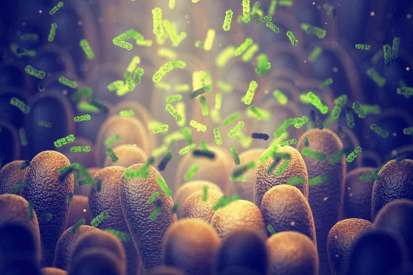 Bacteriile intestinale conlucrează pentru a depăși carențele dietetice [studiu]