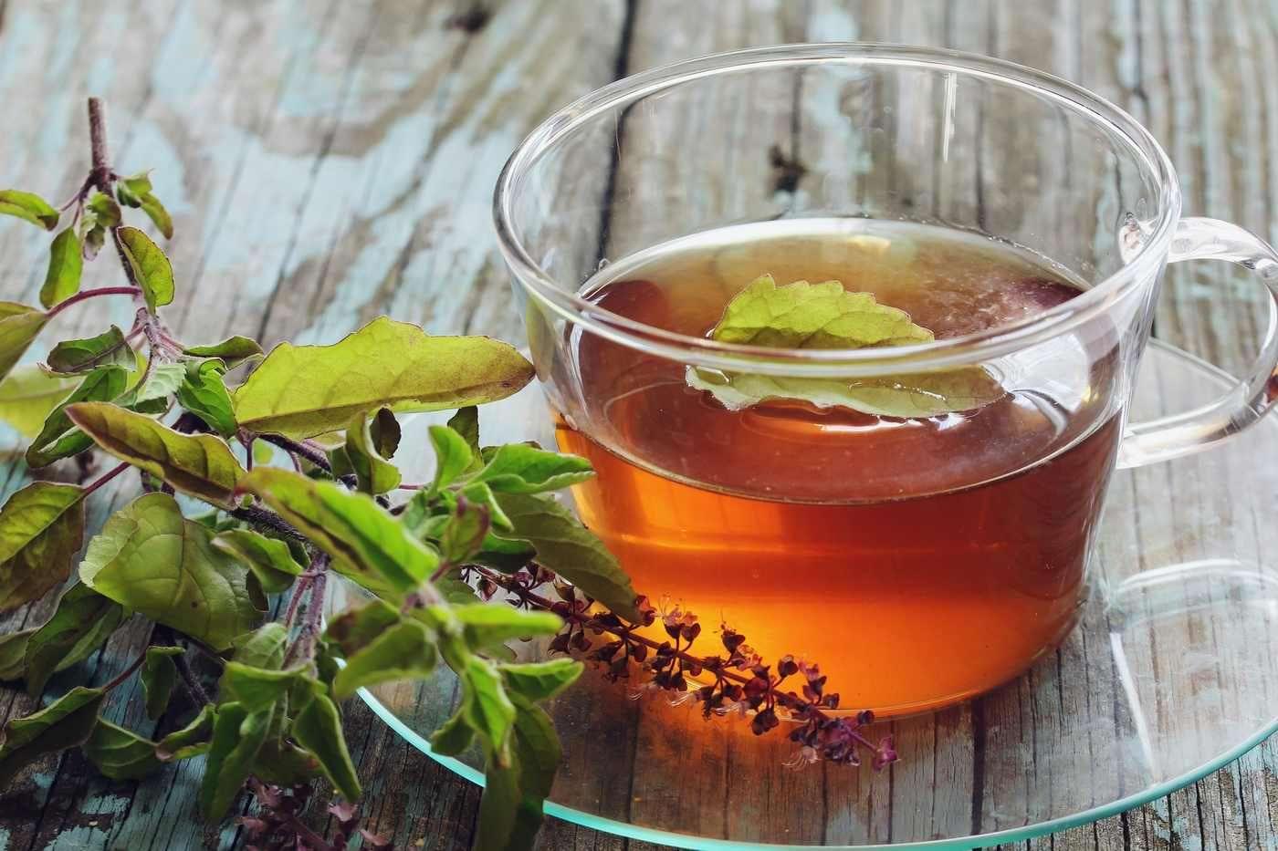 Ceaiul Tulsi: beneficii și contraindicații