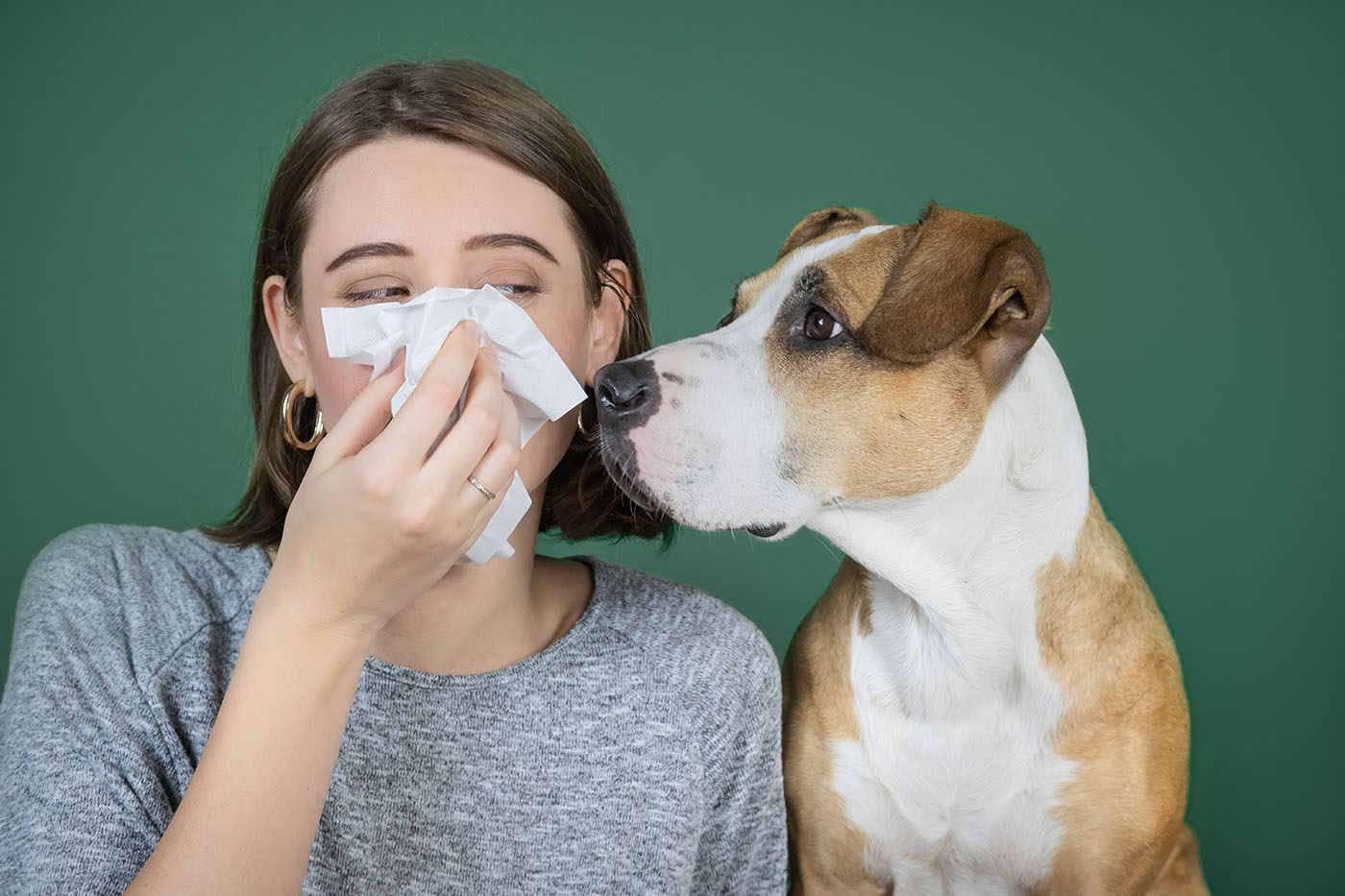 Alergia la câini și pisici: ce e bine să știi?