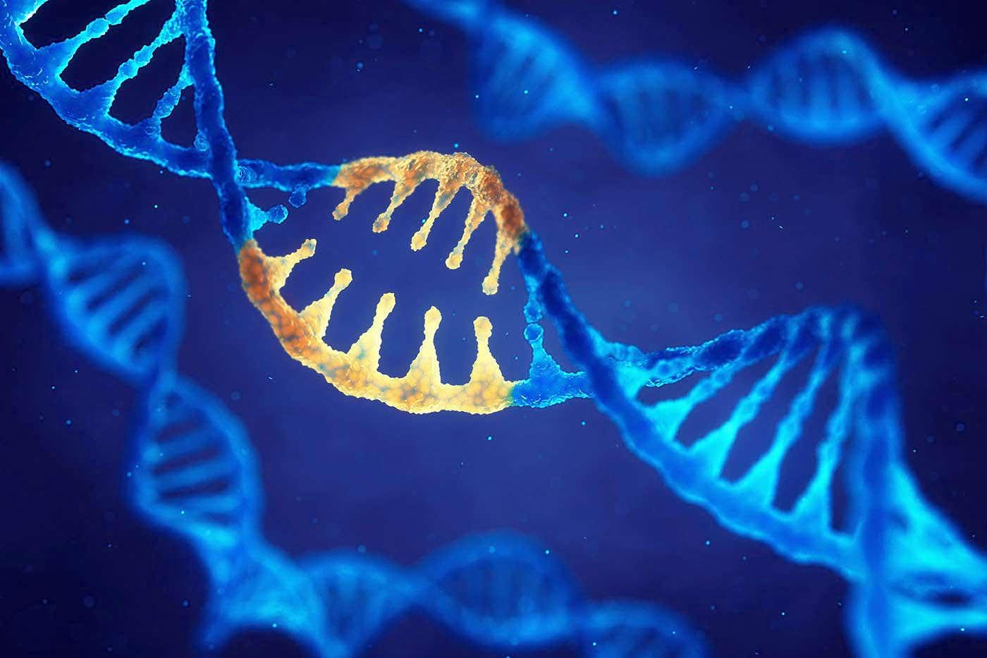 Cum repară bacteriile ADN-ul?