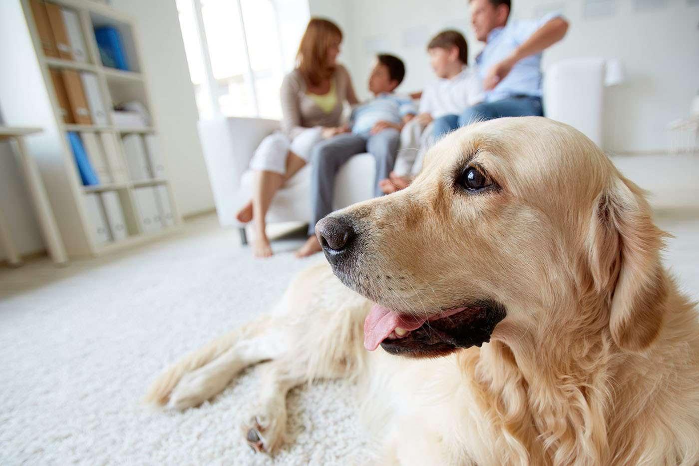 A avea un câine contribuie la o mai bună sănătate mentală