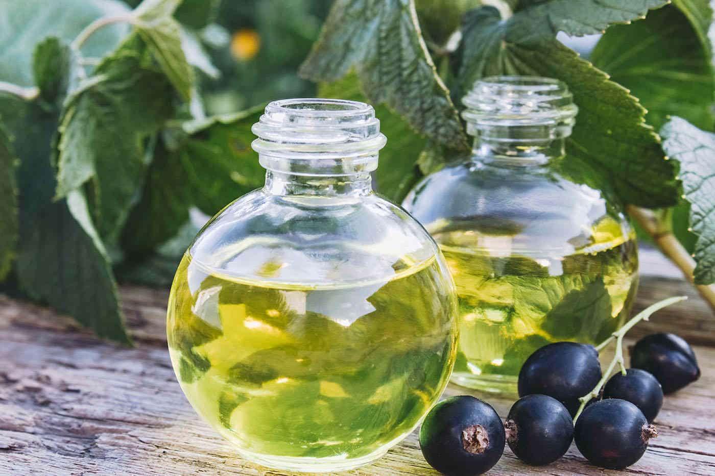 Uleiul de coacăz negru: beneficii și efecte secundare